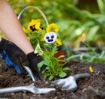 safe gardening tips edison nj